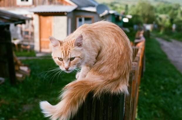 Кажется, ближе лучше не подходить! город, домашние животные, забор, кот, кошка, село, улица, эстетика
