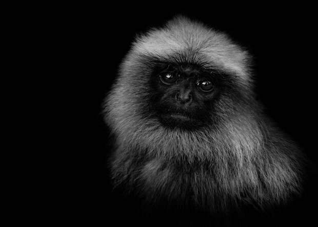 zhivotnye 12 Черно белые портреты диких животных