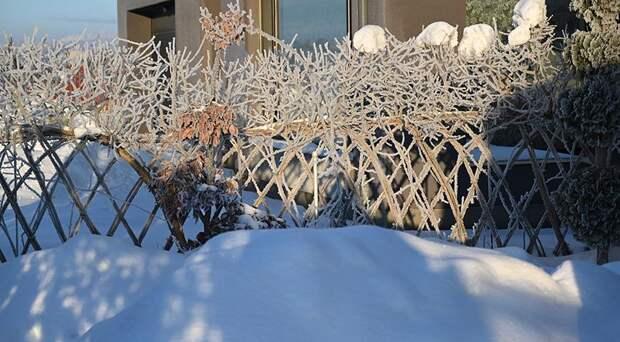 Забор - живой плетень из ивы: 3 варианта от сложного-дорогого до бесплатного-простого