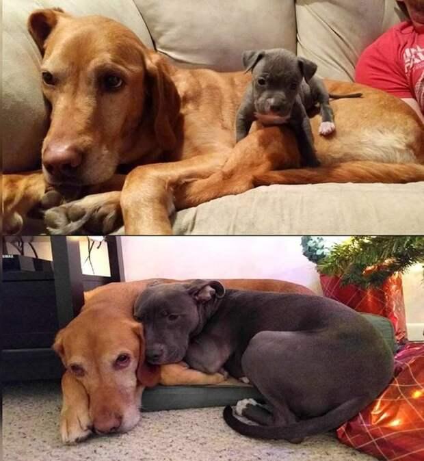 Душевные фото с животными
