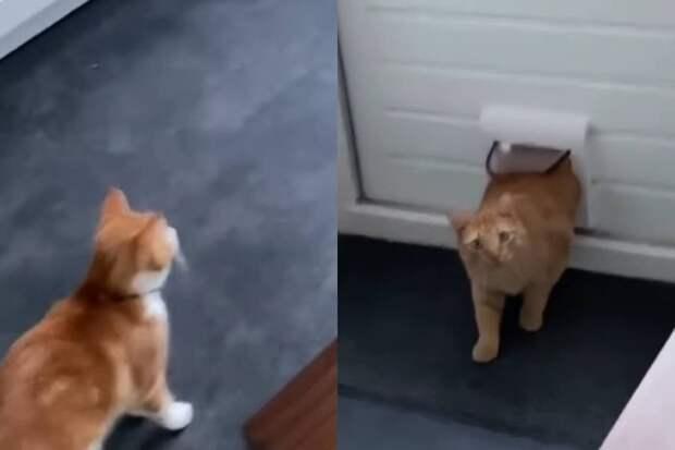 «Попались»: тайное свидание кошки и уличного кота сняли на видео