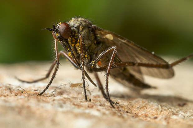 Нелюбовь к комарам основана на нескольких причинах / Фото: fotokto.ru
