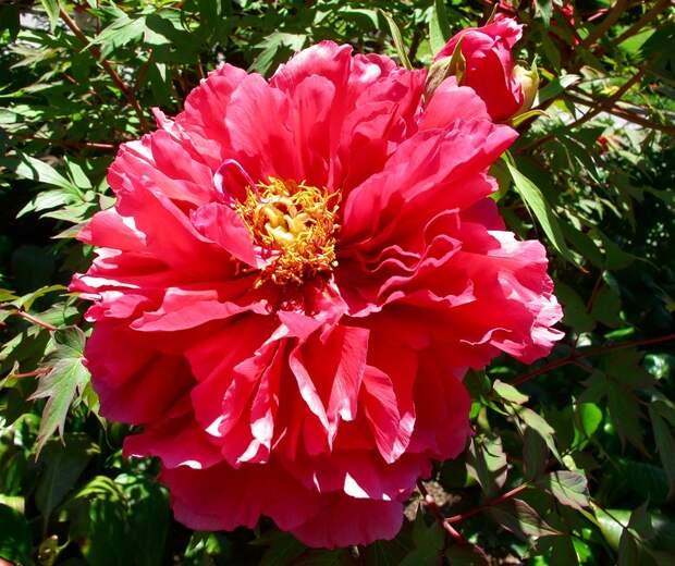 Майнау - остров цветов