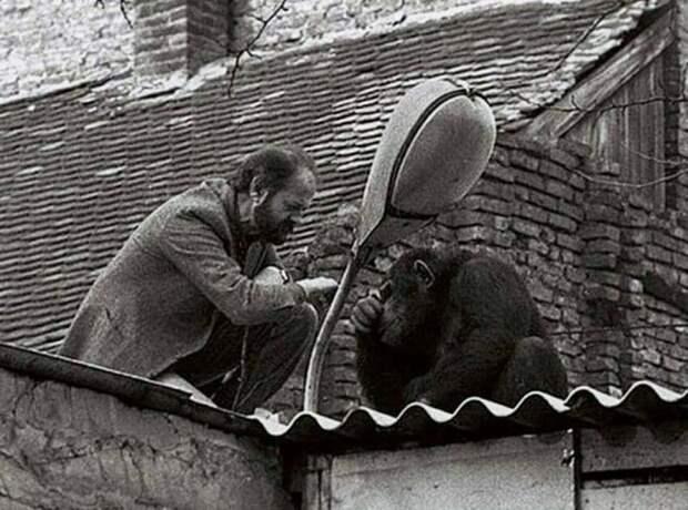 Сами - сбежавшая звезда Белградского зоопарка
