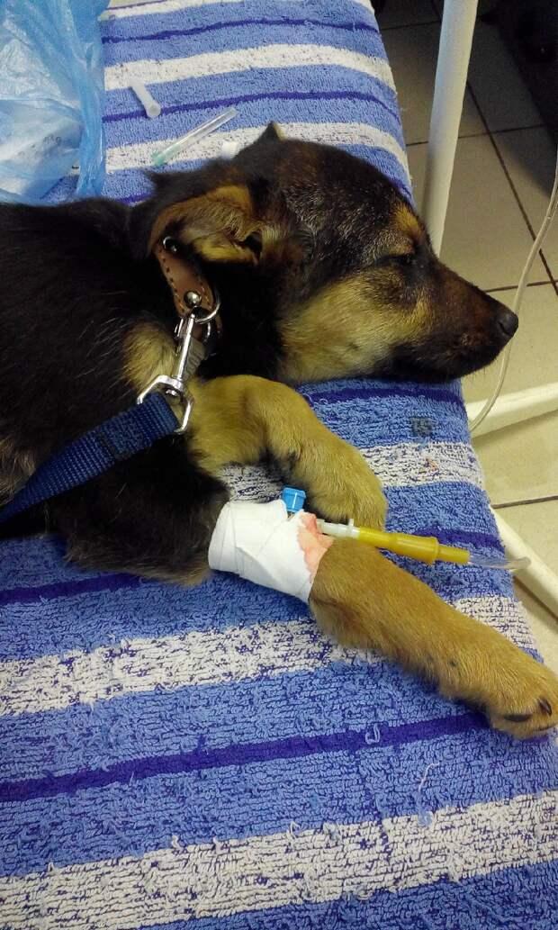 Девушка заступилась за слабого бездомного щенка, отобрав его у подростков