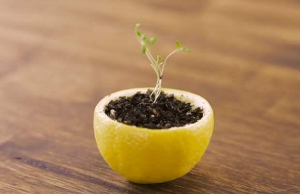 Лимон - наиболее универсальный вариант / Фото: amomedia.com