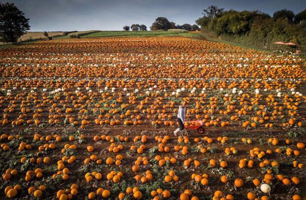 Осень в Великобритании