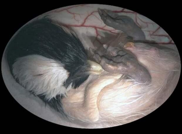 Так зарождается жизнь: потрясающие фотографии разных существ до их появления на свет