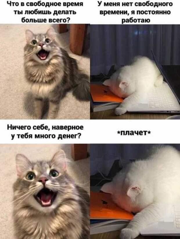 Весёлые мемы с котами
