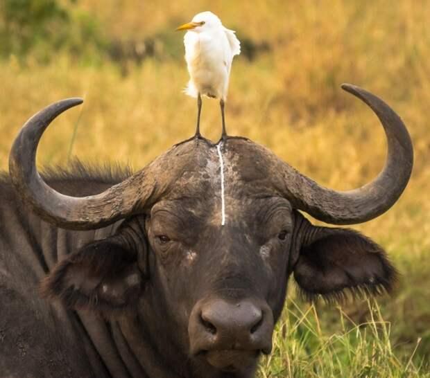 17 фото, на которых животные оказались настоящими засранцами