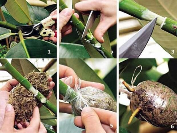 Уникальный способ размножения деревьев и кустарников