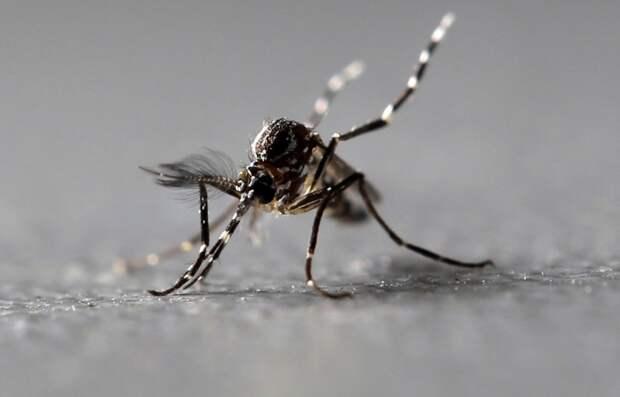 Ученые выяснили, что делает человеческую кровь «такой вкусной» для комаров