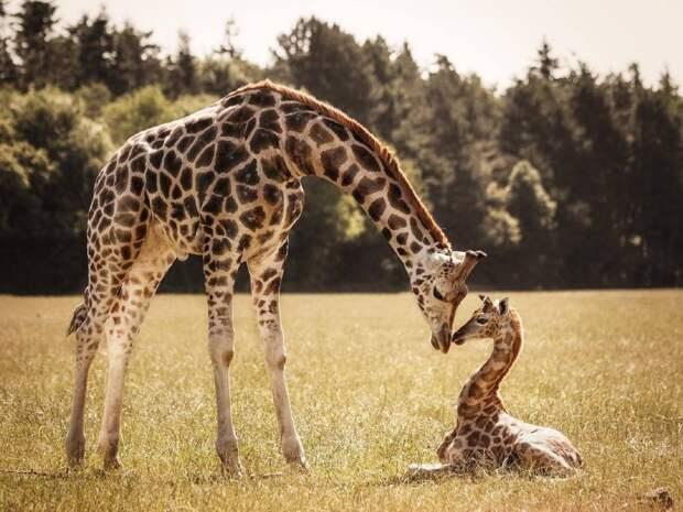 Суперсилы природы: пять невероятных способностей млекопитающих