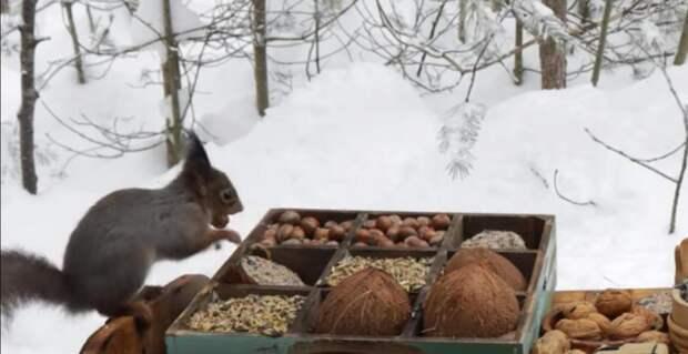 В зимнем лесу люди установили поднос с едой для белок и птиц и показали, как отреагировали животные