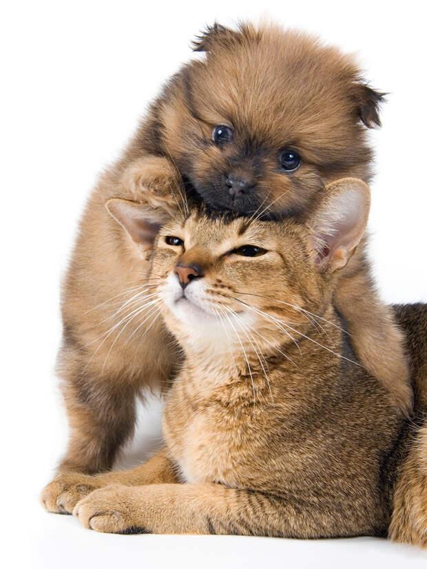 Вражда между кошками и собаками скоро прекратится!