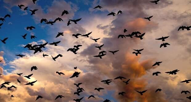 Учёные подсчитали количество птиц, обитающих на планете