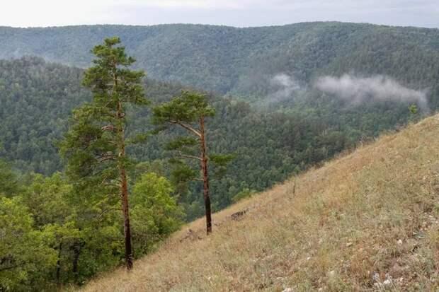 Растительность Жигулевских гор