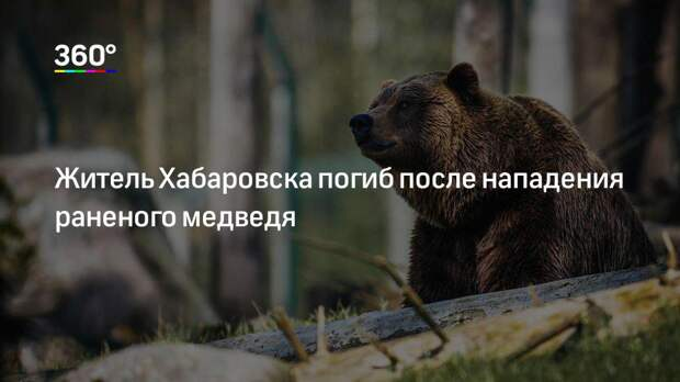 Житель Хабаровска погиб после нападения раненого медведя