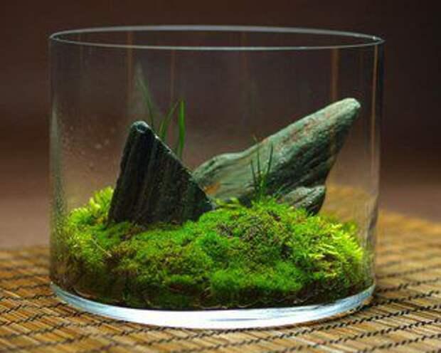 Кокедама, кусамоно, вабикуса: экзотические формы фитодизайна