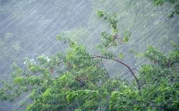 На Рязанскую область надвигается гроза и сильный ветер