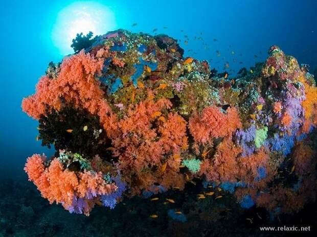 underwater_038
