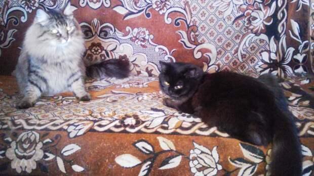Кошки сами выбирают себе хозяев...