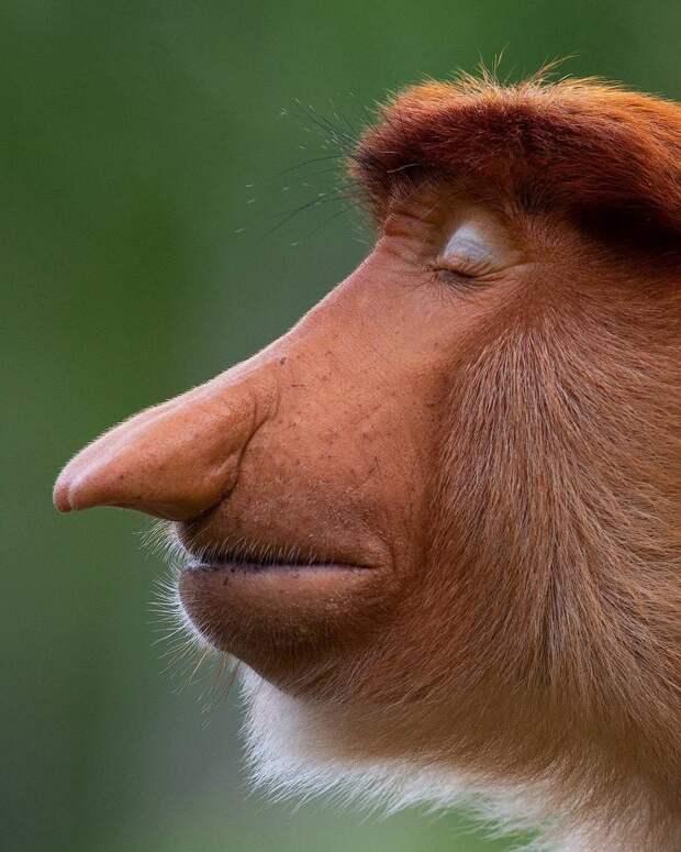 Мимика животных, похожая на человеческую