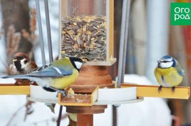 Птицы, которых не стоит привлекать в сад