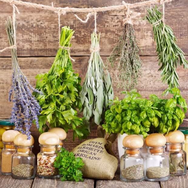 Картинки по запросу herbal remedies