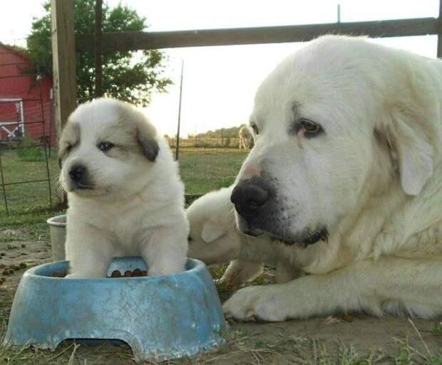 Животные, которые познали радость материнства