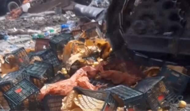 Около 3 тонн санкционных яблок уничтожили воВладикавказе