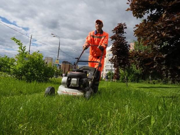 Траву на Новокуркинском шоссе приведут в порядок — Жилищник