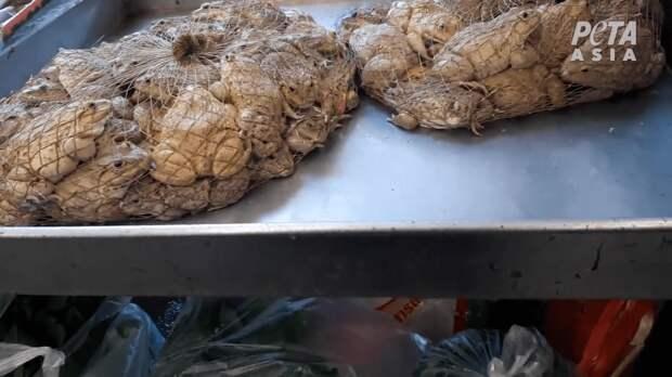 Дикое мясо: вИндонезии нашли рынок слетучими мышами икрысами