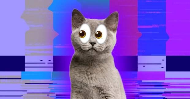 Что видят кошки и собаки, когда смотрят телевизор