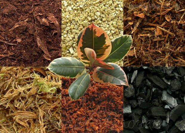 Как улучшить структуру почвы и повысить ее плодородие — ВикиСтрой