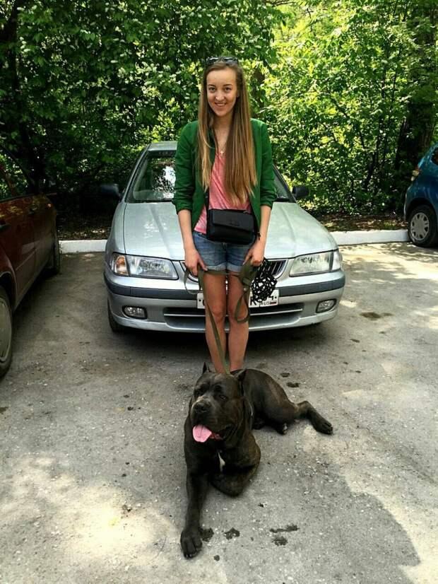 Породистый пес-гигант не находил себе места от тоски в приюте кане-корсо, порода, собака, черный пес