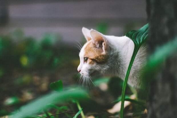 Биологи объяснили, почему домашние коты любят охотиться