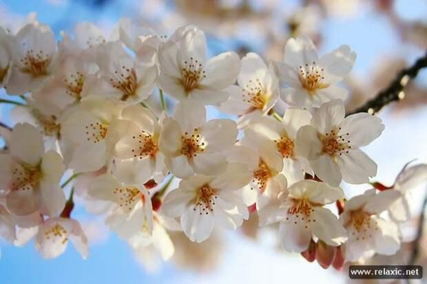 Весна пришла (24 фото)