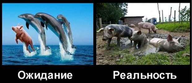 НАТО поставила Украине дизлайк