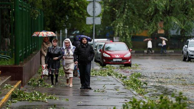 Москвичей призвали не ставить машины под деревьями из-за грозы и ветра
