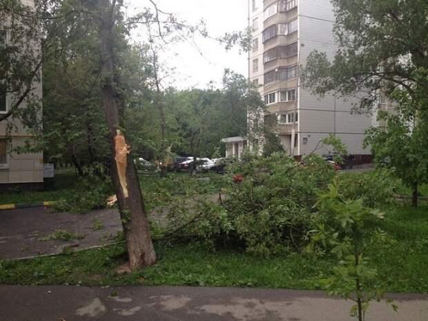 В Москве из-за сильного ветра повалено более полусотни деревьев и повреждены десятки автомобилей