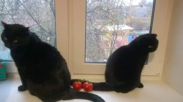 Мелодрама «Прошла любовь, завяли помидоры» гифки, коты, фото