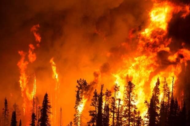 Россиян будут штрафовать за разведение костров в лесу во время режима ЧС
