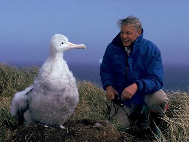 Альбатрос-птица-Описание-образ-жизни-и-виды-альбатроса-11