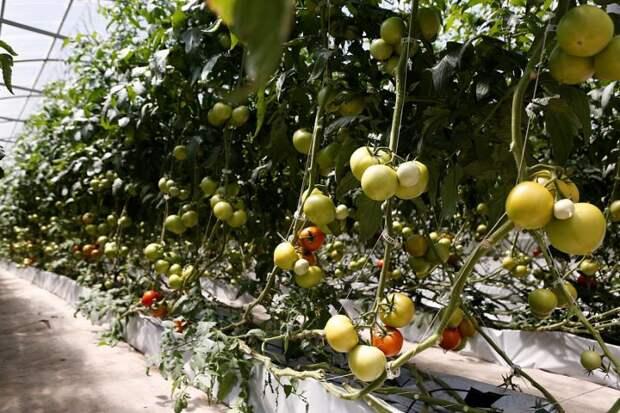 Кубанские аграрии получили более 2 миллиардов рублей господдержки