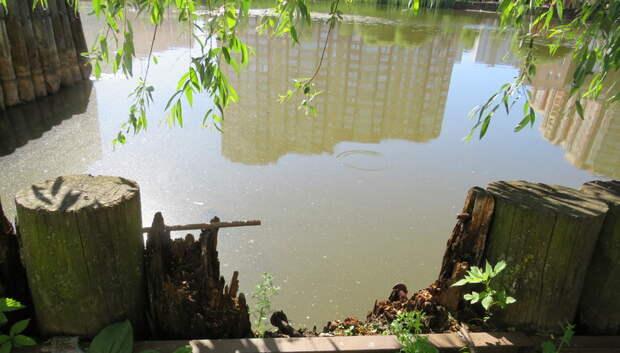 Пруд в 6‑м микрорайоне Мытищ: мусор, сгнившая ограда и пьяные серенады