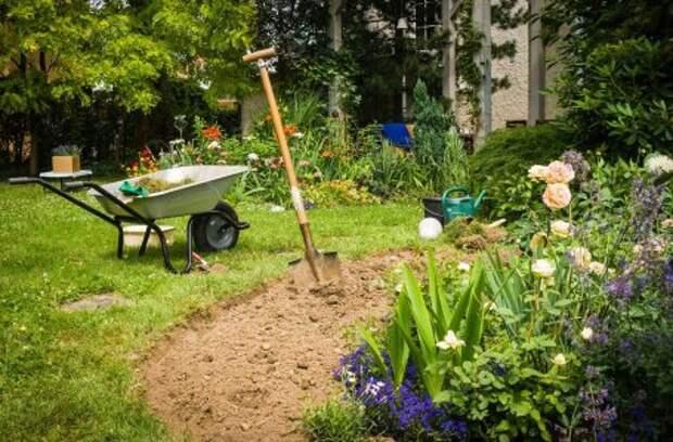 Васильки садовые: самые красивые виды и сорта цветов (с фото)