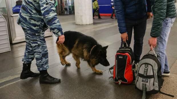 Собака помогла полицейским узнать подробности смерти бездомного в Ленобласти