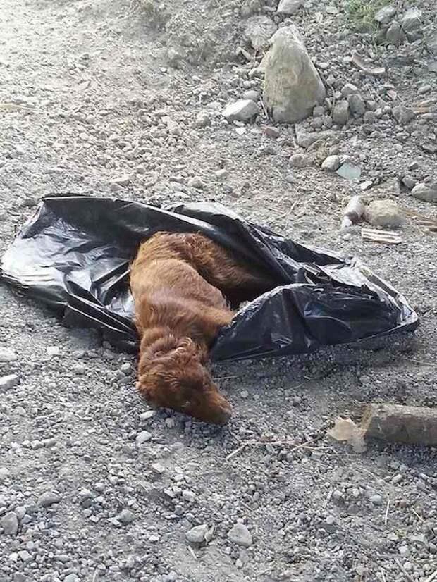 Две девушки услышали крик о помощи доносящийся из мусорного мешка...