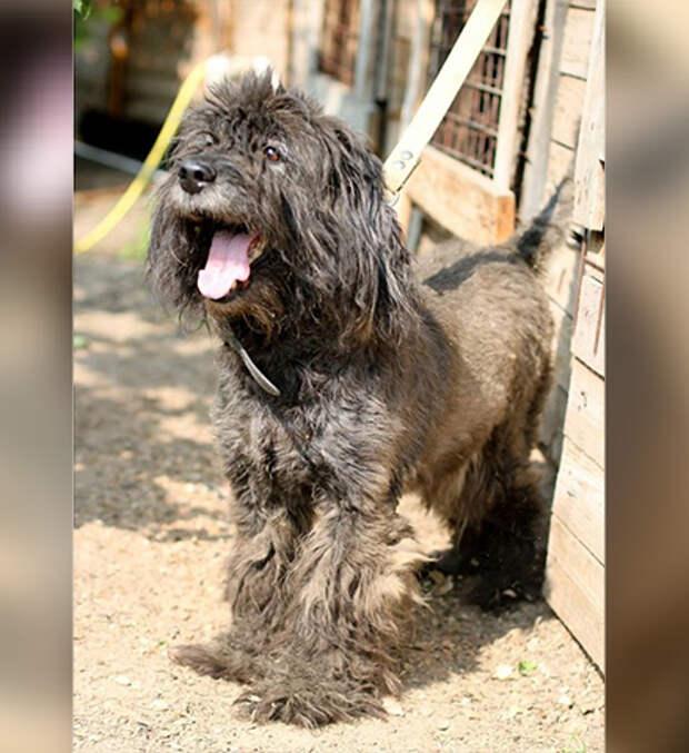 """Брошенный на остановке пес ждет своего хозяина. Фото: общество """"Верность"""", соцсети."""